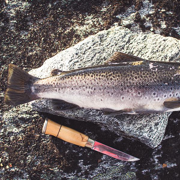 best fishing knife 2021